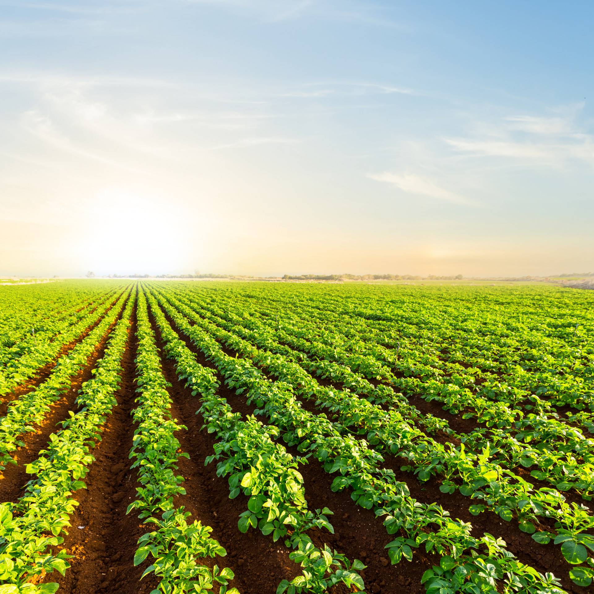 Leading the way in sustainable plant-based innovations