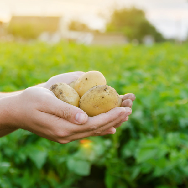 Bringing the sustainable food system to a higher TRL level
